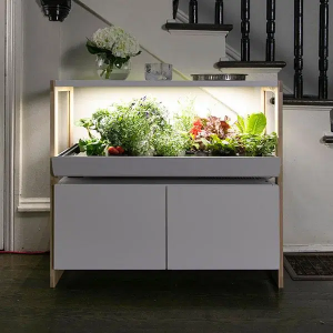 Rise Gardens is a hydroponic garden
